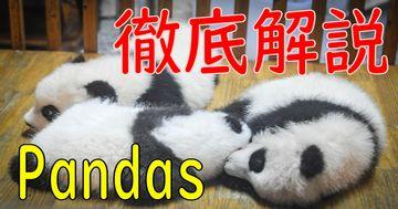 Pandas徹底解説 - Python